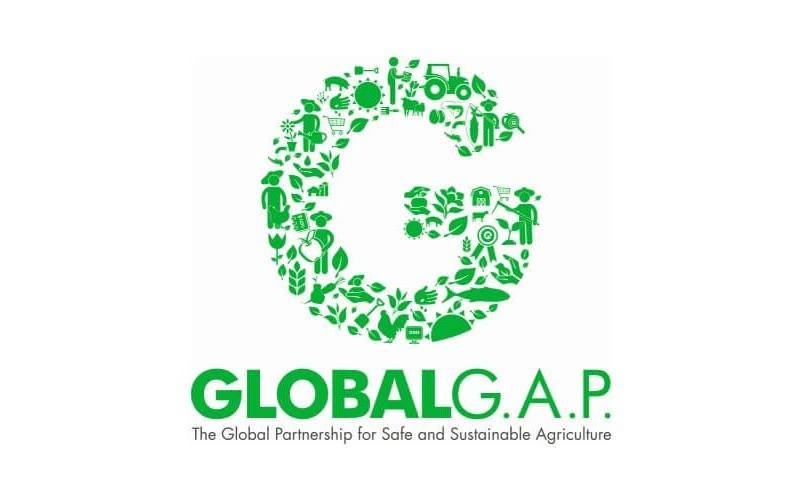 GLOBAL G.A.P. nově i pro brokolici