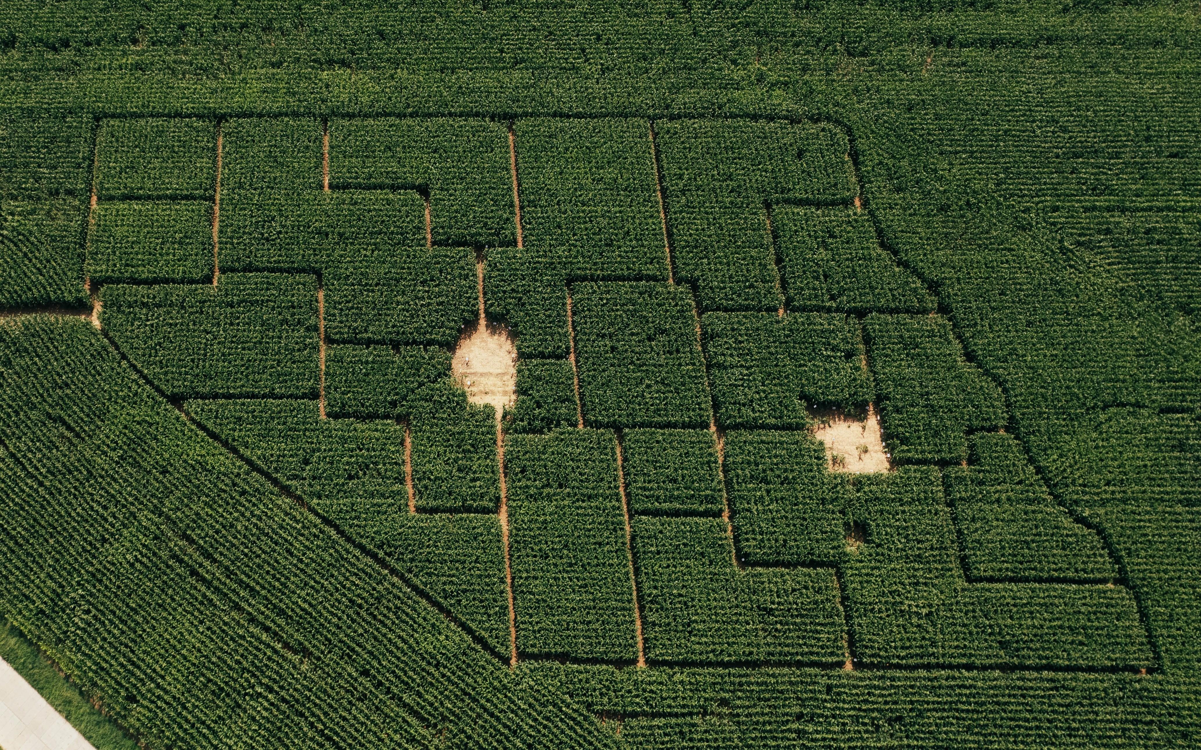 Všestarské kukuřičné bludiště